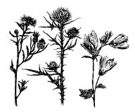 Drawing set meadow herb hand-drawn sketch  illustration Royalty Free Stock Photos