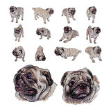 Drawing set of pug Royalty Free Stock Photos