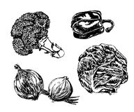 Drawing set of vegetables: broccoli, onions, cabbage hand drawn  illustration Royalty Free Stock Images