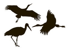 Drawing silhouettes of three storks Royalty Free Stock Image