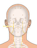 Drawing with Skeleton, Acupuncture Point ST3 Juliao, 3D Illustra Stock Photography