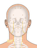Drawing with Skeleton, Acupuncture Point ST9 Renying, 3D Illustr Royalty Free Stock Images