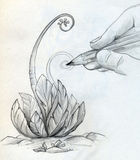 Drawing a sketch of a plant. Hand with pencil is drawing a sketch of a plant with spiral stems Stock Images