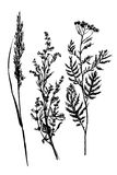 Drawing sketch set field herbs hand drawn  illustration Royalty Free Stock Photos
