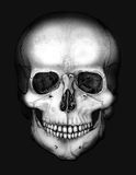 Skull in the darkness. Drawing of the skull in the darkness vector illustration