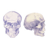Drawing skulls and bones Royalty Free Stock Photography