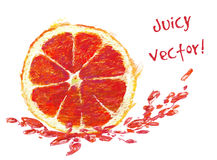 Drawing slice of grapefruit Stock Photo