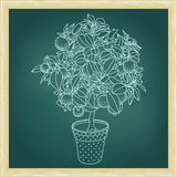 Drawing of a small citrus tangerine, orange or lemon tree Royalty Free Stock Images