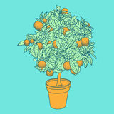 Drawing of a small tangerine tree in a pot in contour style. Royalty Free Stock Photos