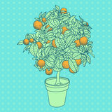Drawing of a small tangerine tree in a pot in contour style. Royalty Free Stock Image