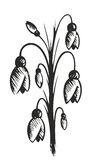 Drawing of spring flowers. Drawing of the first wild spring flowers Royalty Free Stock Photo