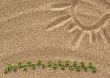 Drawing sun on the sand and plants Stock Image