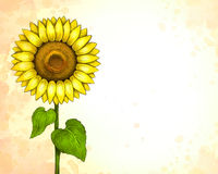Drawing of sunflower Royalty Free Stock Images