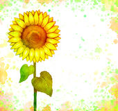 Drawing of sunflower Royalty Free Stock Image