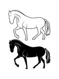 Drawing thoroughbred stallion. On the image is presented drawing thoroughbred stallion Royalty Free Stock Photography