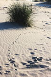 Drawing track on the Ameland Island Beach, Holland Stock Images