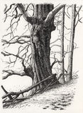 A drawing of a tree Stock Photo
