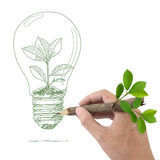 Drawing tree in a light bulb. Stock Photography