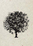 Drawing  tree maple on a beige rice paper. Black silhouette on a beige rice paper. Graphic arts Stock Photo