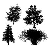 Drawing of the tree vector Royalty Free Stock Image