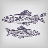 Drawing with trout Royalty Free Stock Images