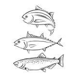 Drawing tuna and salmon fish, vector. Drawing tuna and salmon fish on white background Stock Photo