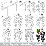 Drawing tutorial. Blackcurrant. Royalty Free Stock Photography