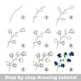 Drawing tutorial. How to draw a Bluebell Stock Images