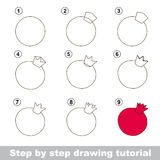 Drawing tutorial. How to draw a Pomegranate Royalty Free Stock Image