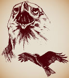 Drawing of two Eagles. Hand-drawn, two grungy Eagles Royalty Free Stock Photography
