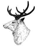 Drawing of wild deer Stock Image