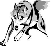 Drawing a wolf attacker. Vector stylized image of a wolf attacking Royalty Free Stock Photos