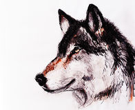 Drawing wolf on old paper, original hand draw. Drawing wolf on old paper, original hand draw stock illustration