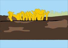 Drawing yellow Mushroom. On the wood Royalty Free Stock Image