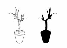 Drawing of a yucca. Illustration of a plant, EPS 8 file Vector Illustration