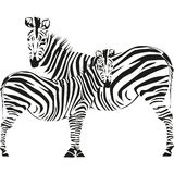 Drawing of a zebra Stock Photography