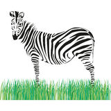 Drawing of a zebra Royalty Free Stock Image