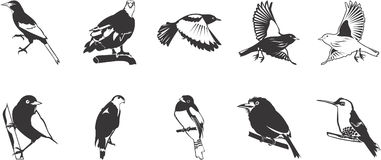 Drawings of birds. Black and white sketches of birds Stock Photography