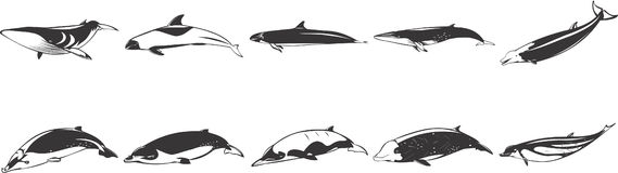 Drawings of Fish & Dolphins. Black and white drawings of fish, whales and dolphins vector illustration