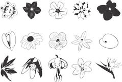 Drawings of Flowers. A set of black and white drawings of various flowers stock illustration