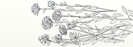 Drawings of flowers with leaves Royalty Free Stock Image