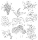 Drawings  of flowers Royalty Free Stock Photography