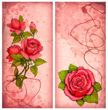 Drawings Of Pink Roses Royalty Free Stock Images