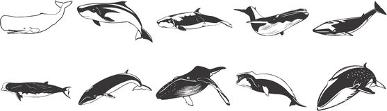 Drawings of whales. Black and white drawings of whales Stock Images