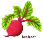 Drawn beetroot Royalty Free Stock Image