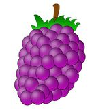 Drawn berry of blackberry on a white background Stock Image