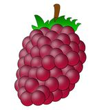 Drawn berry of raspberry on a white background Stock Photography