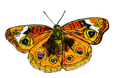 The drawn butterfly. Stock Images
