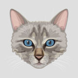 Drawn cat muzzle Royalty Free Stock Photos