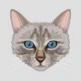 Drawn cat muzzle Royalty Free Stock Photos